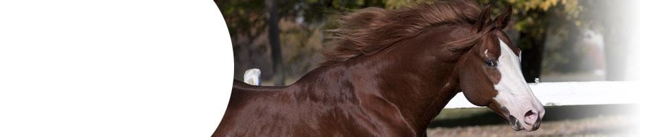 kleine strongyliden pferd